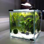 Acheter un Nano Aquarium