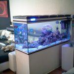 L'installation de votre Aquarium