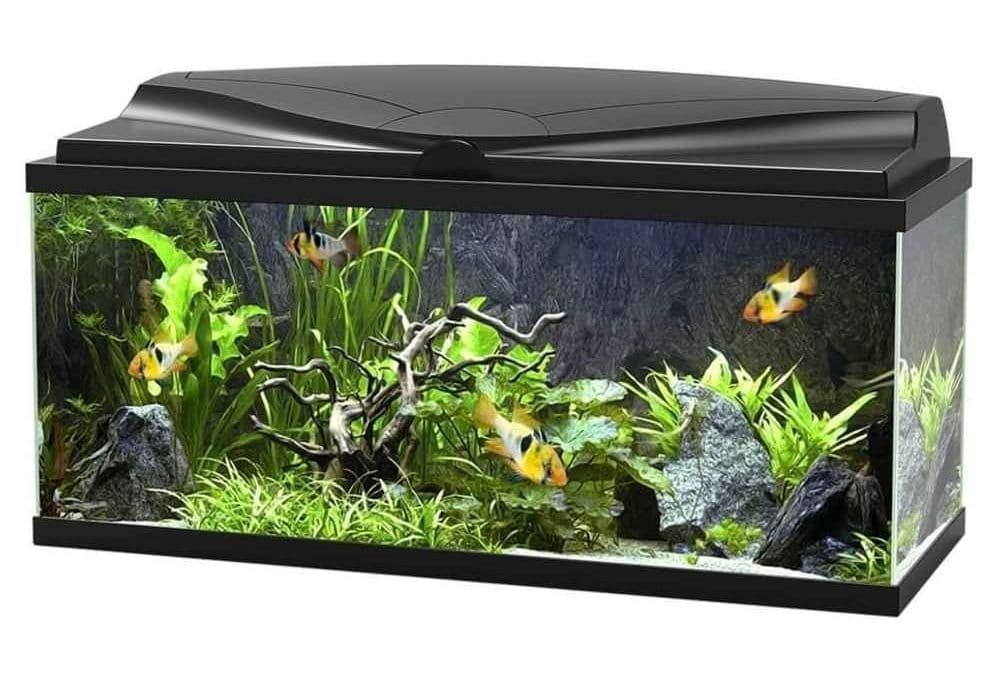 Aquarium Ciano 80 avec LED
