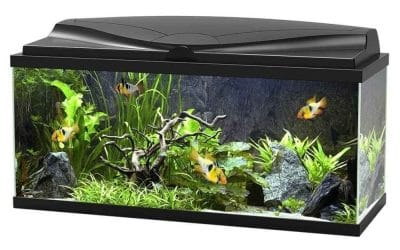 Aquarium Ciano 80 avec LED