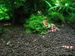 sols et décor débutant pour votre Aquarium