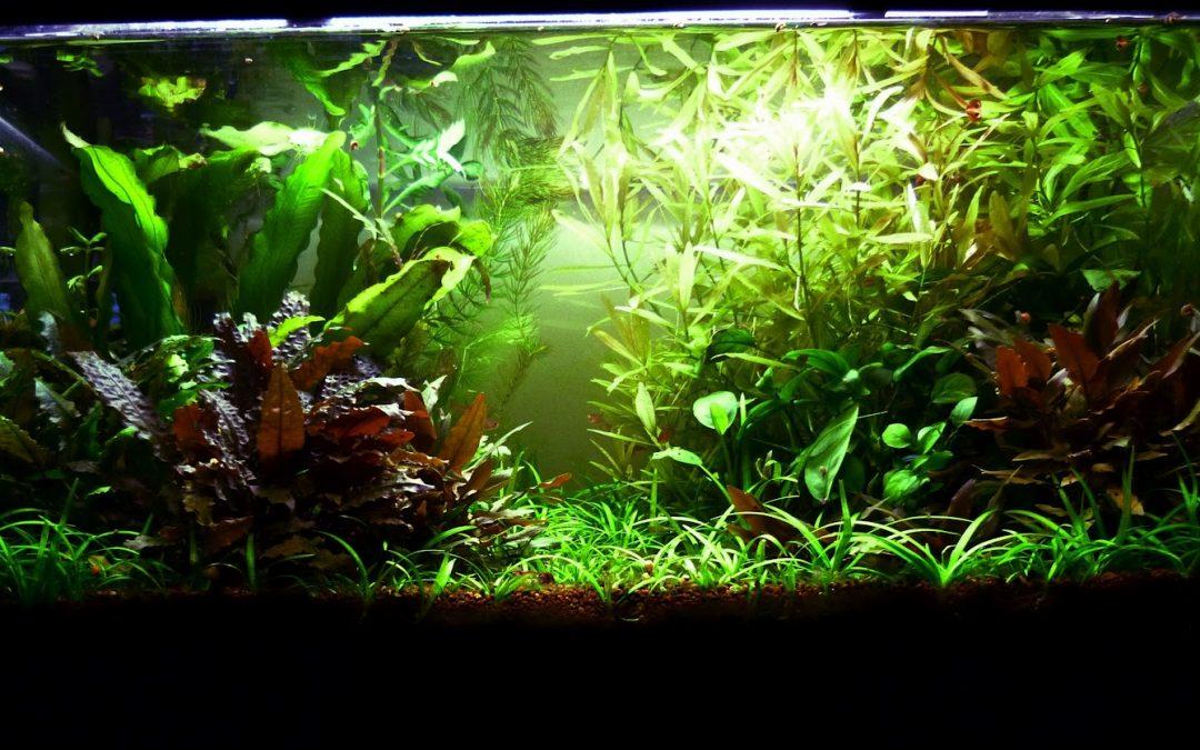 Engrais fait maison pour votre Aquarium
