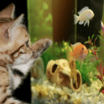 Débuter en Aquariophilie