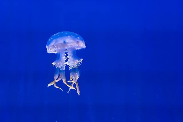 Tester l'eau de votre Aquarium