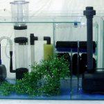 La filtration pour votre Aquarium