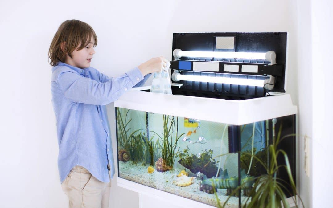 Le choix de votre Aquarium