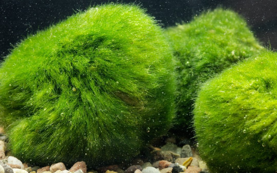 Les besoins des plantes en Aquarium