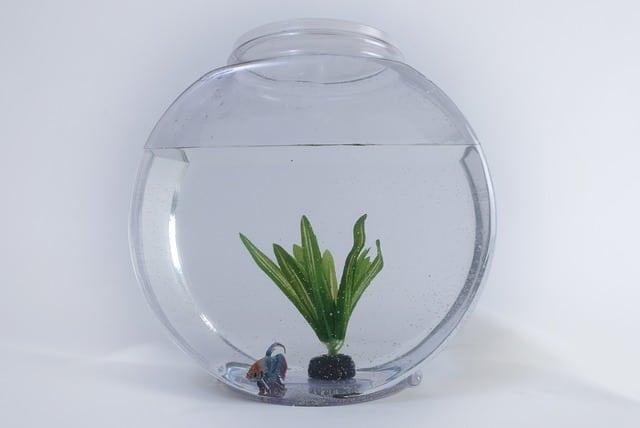 L'entretien des plantes de votre Aquarium