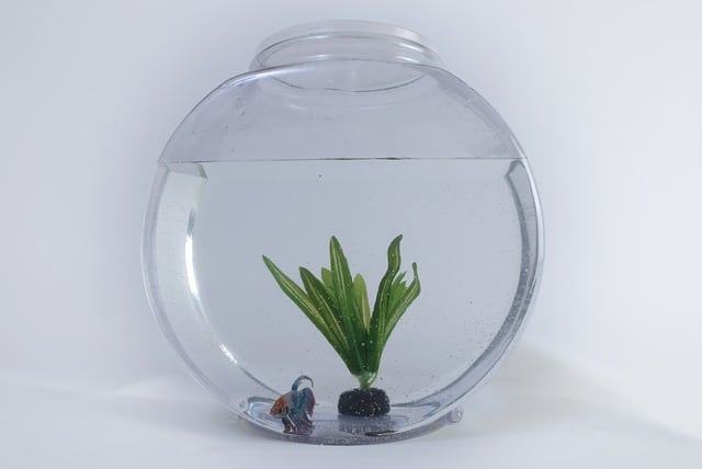 L'entretien de votre Aquarium