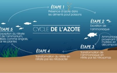 Le Cycle de l'Azote dans un Aquarium