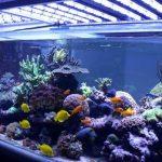 éclairage pour votre Aquarium