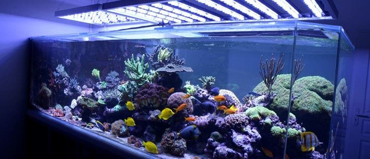 Conseil éclairage pour votre Aquarium