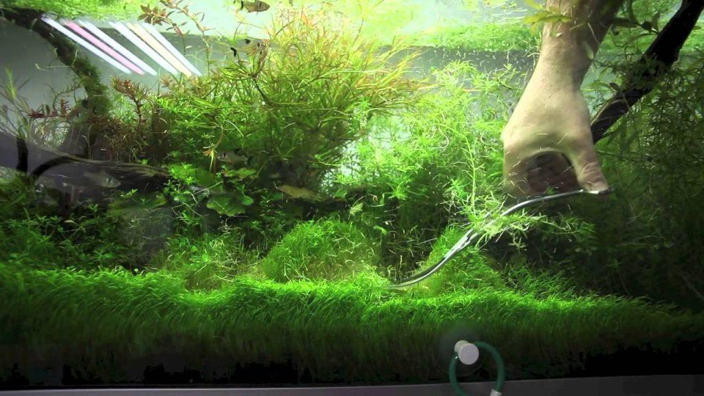entretiens plantes aquarium