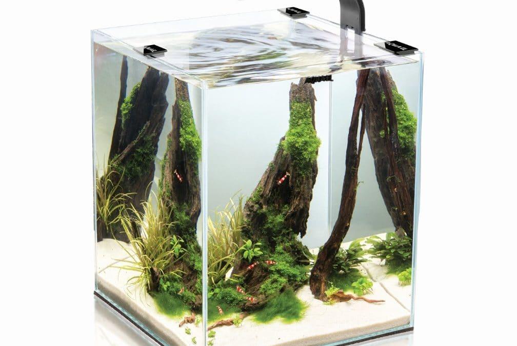 Comment choisir son nano aquarium ?