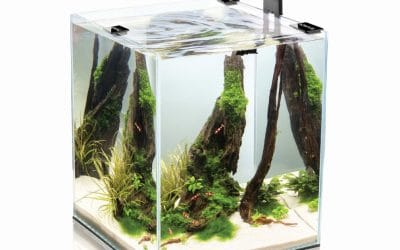 Comment choisir son nano aquarium ?