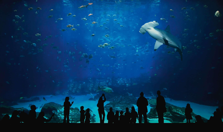 Nausicaá, aquarium