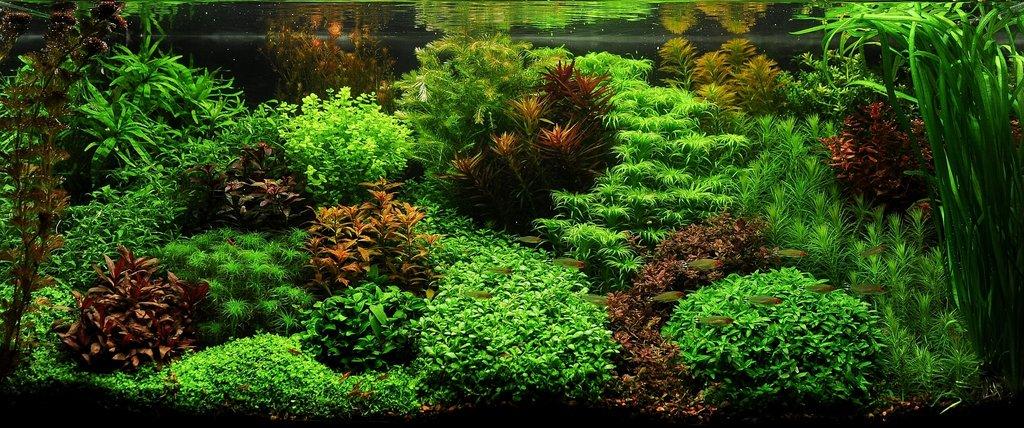 Les plantes à privilégier dans son aquarium d'eau douce