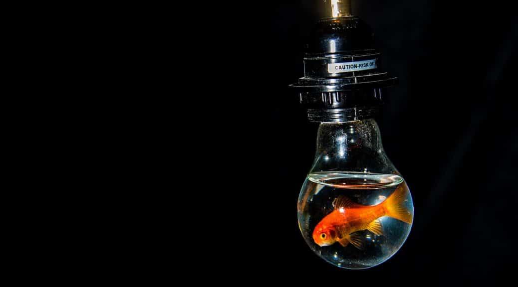 poisson agressif