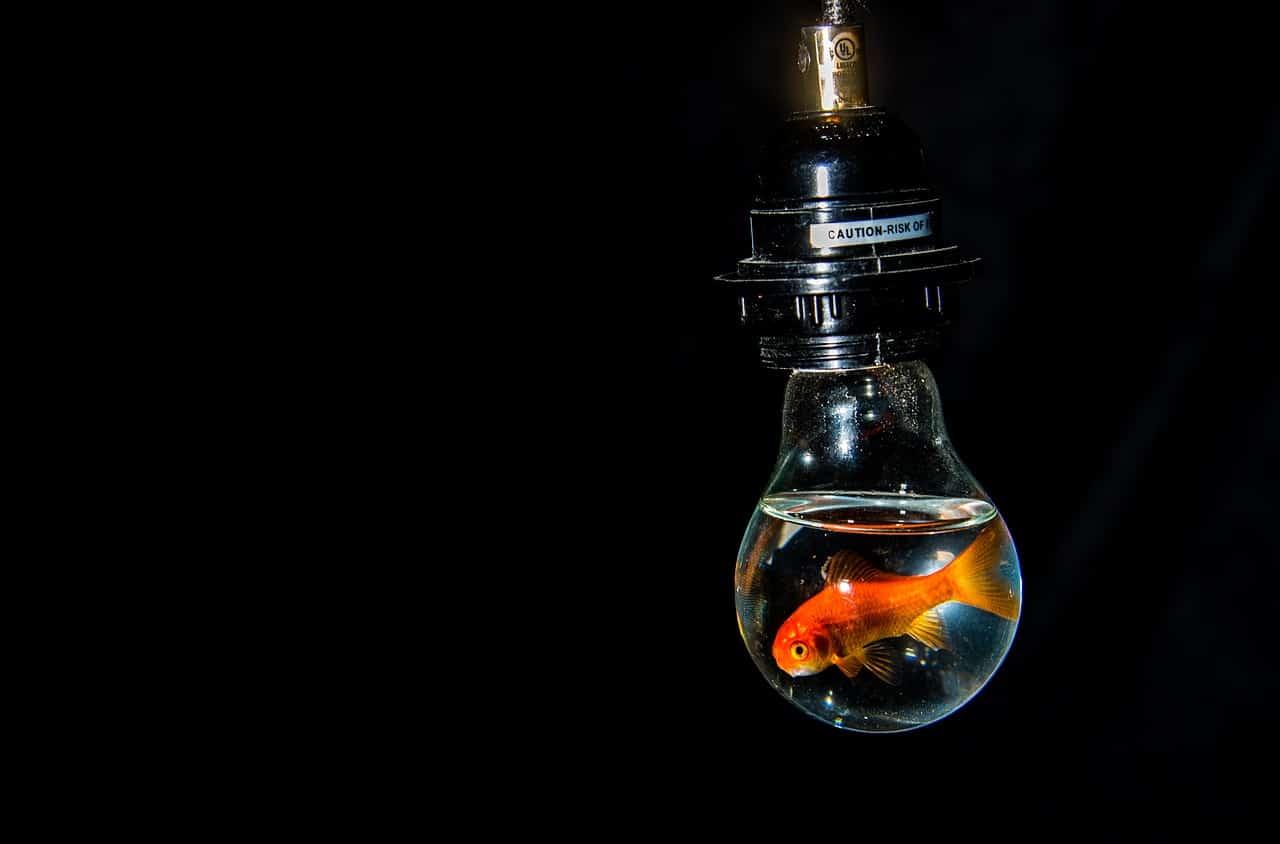 Relations entre agressivité des poissons et spécificités de l'aquarium