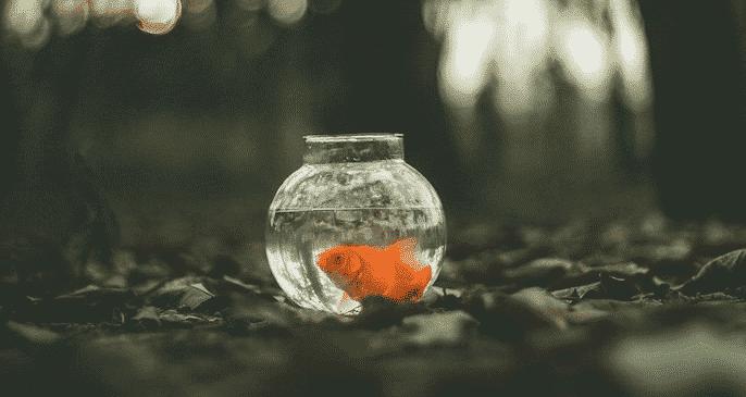 poisson rouge dans un bocal