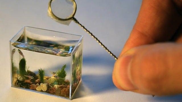 aquarium trop petit