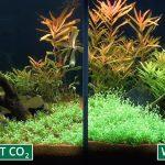 Avantages de l'utilisation d'un régulateur de CO2 dans un aquarium