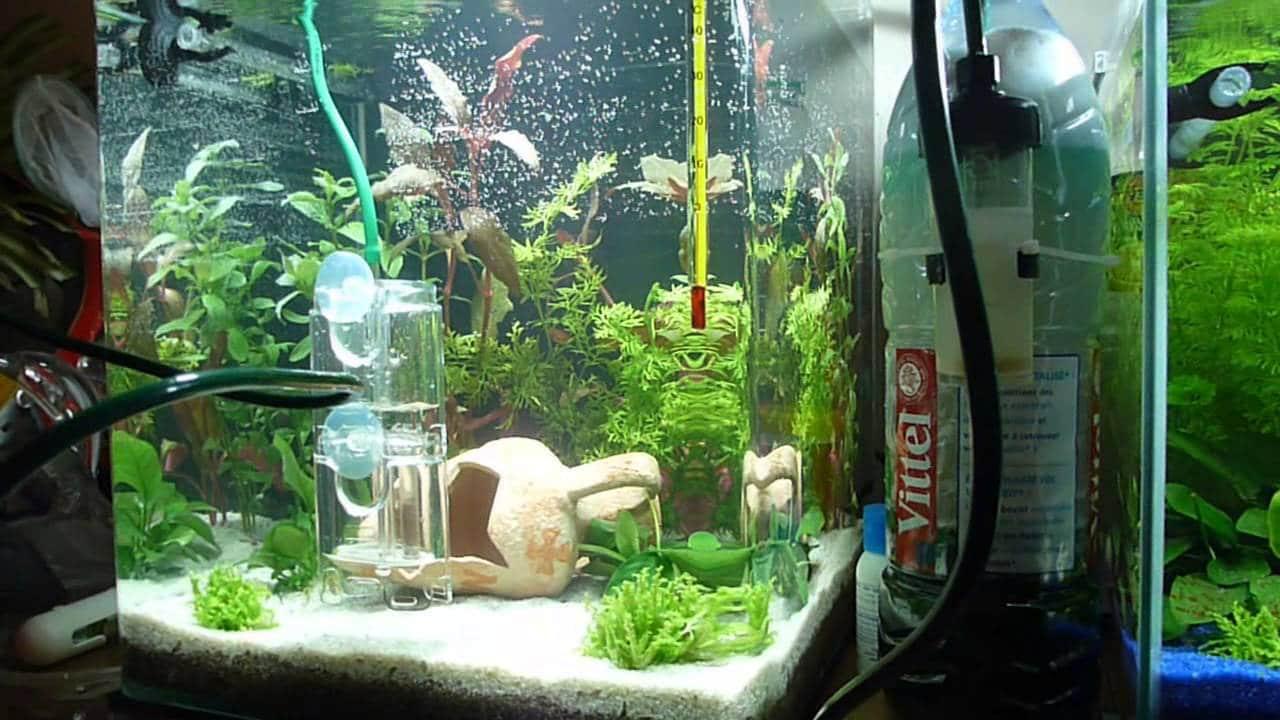 Utiliser et créer votre propre système d'aquarium de co2 maison