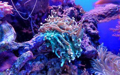 Lancement d'un aquarium d'eau douce ou d'eau salée, ce qu'il faut savoir.