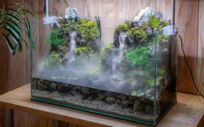 Aquaterrarium – La nouvelle tendance de 2020