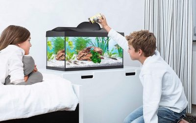 Les 3 meilleurs aquariums à avoir pour 2021